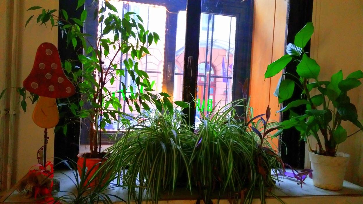 kocsmaturista-budapest-greencaffeandbar-platns