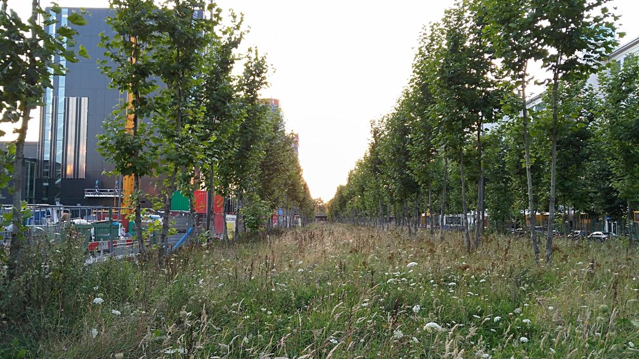 A fűhelyzet egy pillanatképe Stripj-S-ben - Kocsmaturista
