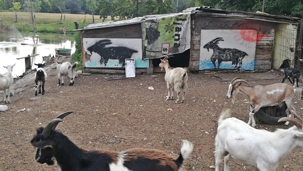 Van nálatok terasz - Népsziget kocsmái - Kecskefarm